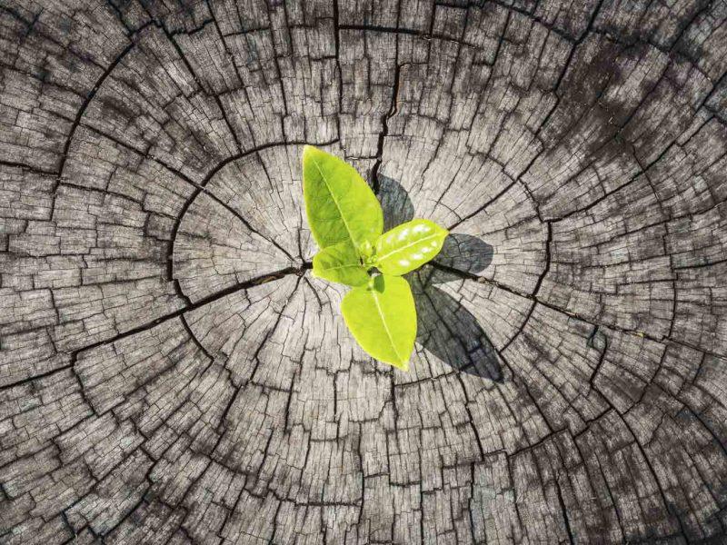 Conférence formation sur comment bâtir la resilience